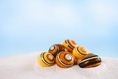Bright polymita shells on white beach sand under the sun light Stock Images