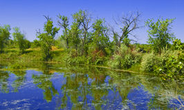 Bright Pond on the Prairie Royalty Free Stock Photos