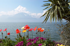 Bright poppy flowers on the background of Lake Geneva. Stock Photography