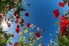 Bright poppy sky Stock Image
