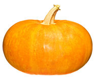 Bright pumpkin Royalty Free Stock Photo