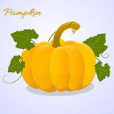 Bright pumpkin with leaves on blue background. Vector illustration Royalty Free Stock Image
