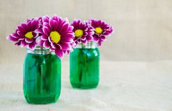 Bright purple argyranthemum flowers in 2 small mason jars. Filled with green colored water against a tan cloth background royalty free stock photo