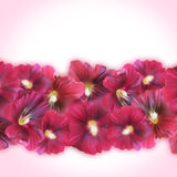 Bright Purple Banner with Mallow flowers for gift cards, posters Royalty Free Stock Image