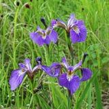 Bright purple flowers Stock Photos