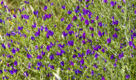 Bright purple flowers swaying Royalty Free Stock Image