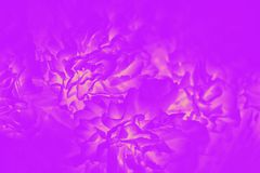 Bright purple fuchsia color with flower pattern. Abstract background. Bright pink purple fuchsia color with flower pattern. Abstract background royalty free stock images