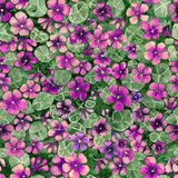 Bright purple and pink nasturtium flowers with leaves on green background. Seamless floral pattern. Watercolor painting. Bright purple and pink nasturtium Stock Photography