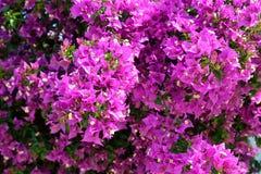 Bright purple wild flowers. Stock Image
