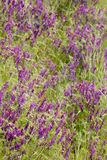 Bright Purple Wildflowers Stock Photos