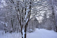 Bright and quiet, has become a winter forest.Snow covered the road. White fluffy snow hung on the branches of trees royalty free stock photos