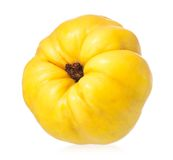 Bright quince Stock Image