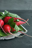 Bright radish with green leaves. On vintage salver Royalty Free Stock Photo