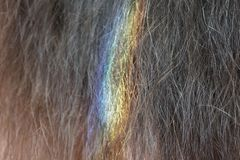 Close-up of natural brown hair colored by rainbow royalty free stock photos
