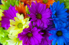 Bright rainbow colors flower bouquet Royalty Free Stock Photography