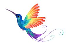 Free Bright Rainbow Hummingbird On White Background Royalty Free Stock Photo - 191066935