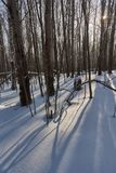 Bright rainbow. Snowdrifts of large snowflakes in the winter woods Stock Photos