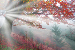 Bright rays Stock Images