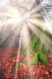 Bright rays Royalty Free Stock Photography