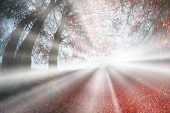 Bright rays Stock Photo
