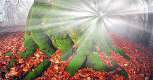 Bright rays Stock Image