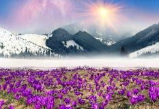 Bright rays Stock Photography