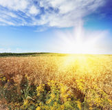 Bright rays of sunlight Stock Images