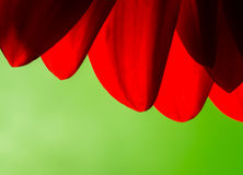 Bright Red Abstract of Chrysanthemum Petals Royalty Free Stock Images