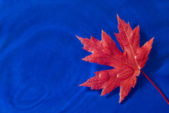 Bright Red Autumn Leaf Over Blue Water Royalty Free Stock Photos