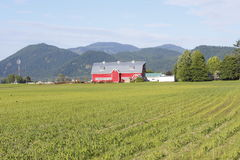 Bright Red Barn Royalty Free Stock Photography