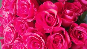 Bright Red beautiful Roses together Stock Photo