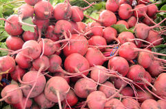 Bright Red Beets Stock Image