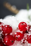 Bright red berries covered in white snow Royalty Free Stock Images