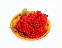 Bright red berries of viburnum on a plate isolated Stock Photo