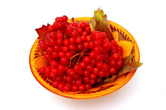 Bright red berries of viburnum on a plate  Royalty Free Stock Photos