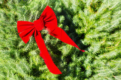 The bright red bow is on the tree. Royalty Free Stock Photo
