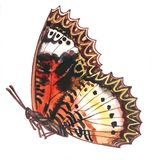 Bright red brown butterfly with a ornamental zigzag contour stock photos