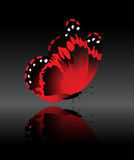 The bright-red butterfly. On a black background Stock Photo