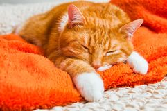 Red cat sweetly sleeping on the couch Royalty Free Stock Photos