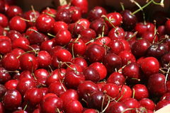 Bright red cherries. Close up of bright red picked cherries Royalty Free Stock Image