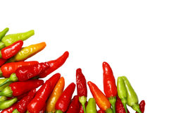 Bright red chili background Royalty Free Stock Photo