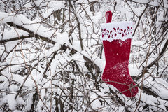 Bright red christmas stocking hanging from snow covered tree branch. Royalty Free Stock Photos