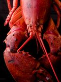 Bright red cooked lobster Royalty Free Stock Photo