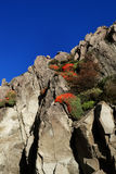 Bright Red Flower in the Rocks. Image of a cliff face with beautiful red flowers growing out of the rocks. Blue Sky Stock Image
