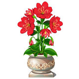 Bright red flowers in beautiful ceramic pot Stock Images