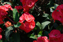 Bright red flowers. Blooming tropical tree with bright red flowers royalty free stock photo
