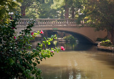 Bright red flowers in front of bridge. River walk in San Antonio with the river and bridge framed by bright backlit flower royalty free stock photos