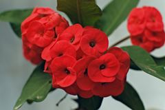 Bright red flowers isolated on a white background stock images