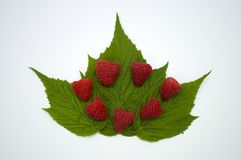 Bright red fresh raspberries, from a family orchard. The raspberry type is Polana. In Serbia Royalty Free Stock Images