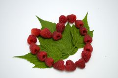 Bright red fresh raspberries, from a family orchard. The raspberry type is Polana. In Serbia Royalty Free Stock Photo